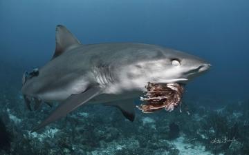Lionfish invasion: Nictitating membranes