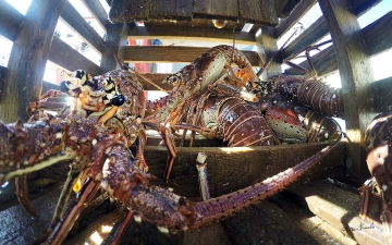 8 Months at Sea: Living for Lobsters