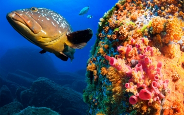 Diving in Sardinia
