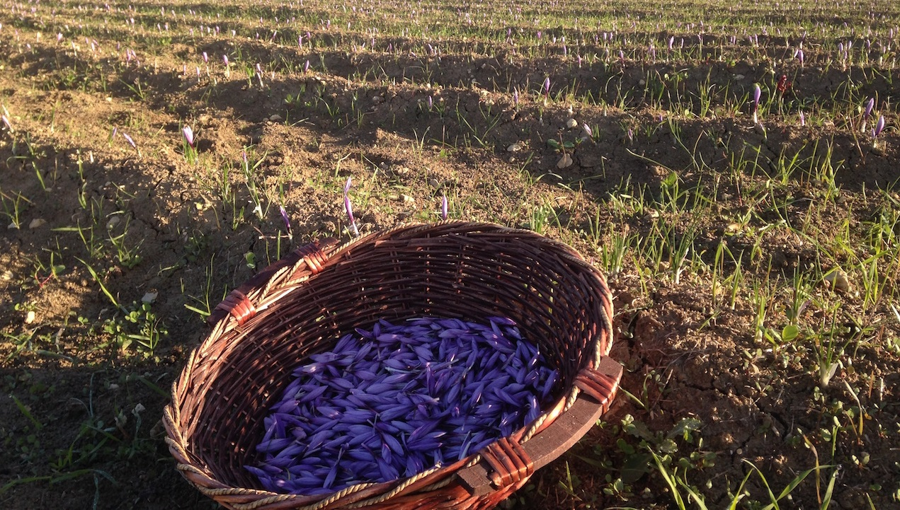 Passione Agricola